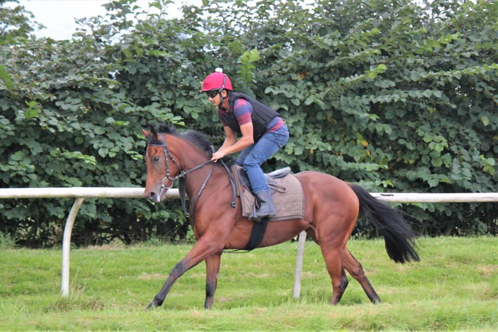 A steady canter for Lady Nectar
