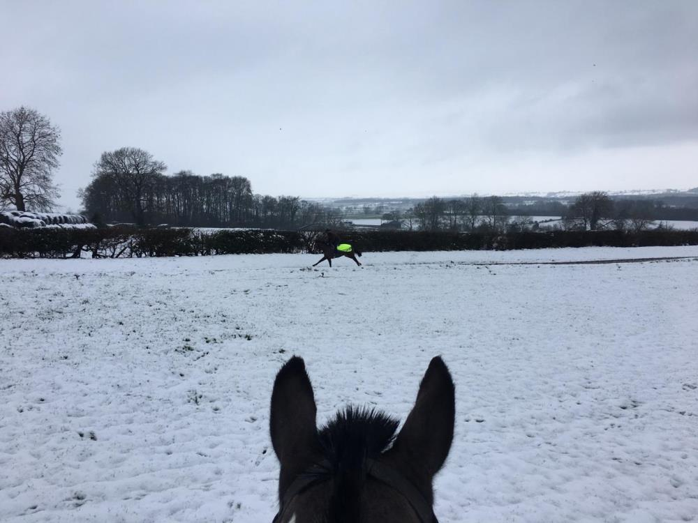 Snow this morning - Stripey watched Hilary J