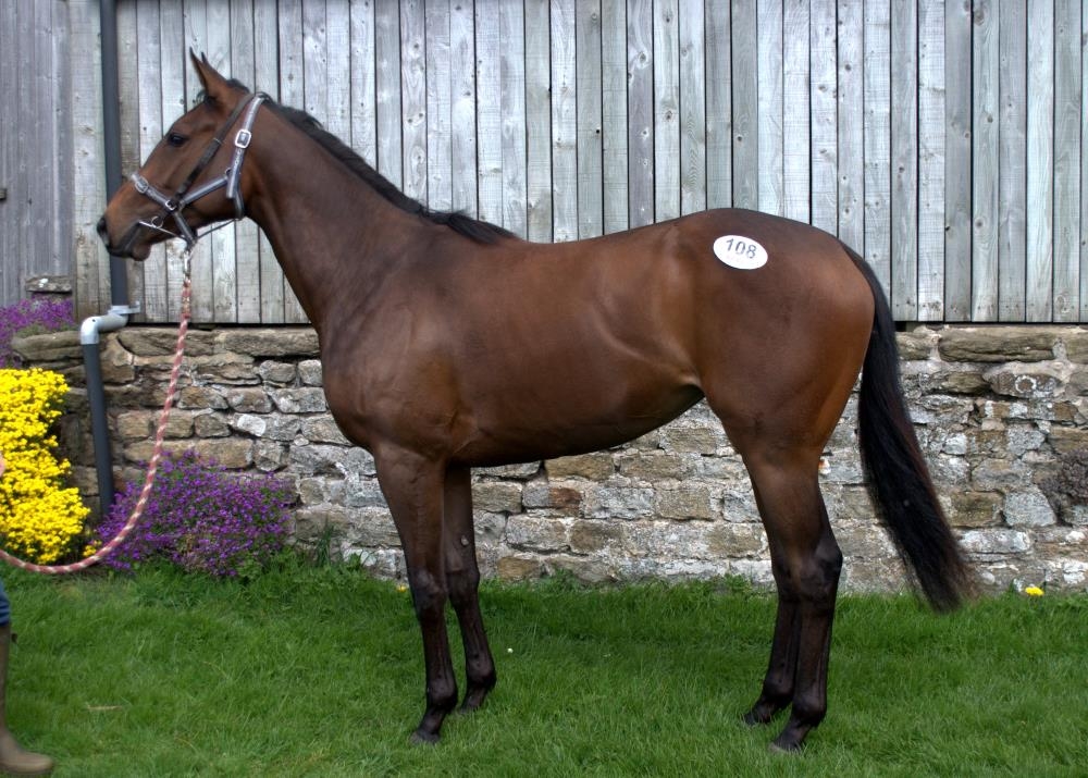 Iffraaj filly purchased at breeze-ups