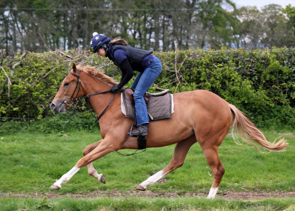 Equiano x Wedding Dream filly is looking for an owner