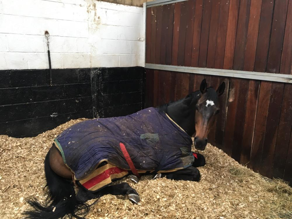 Red Charmer enjoys a lie in