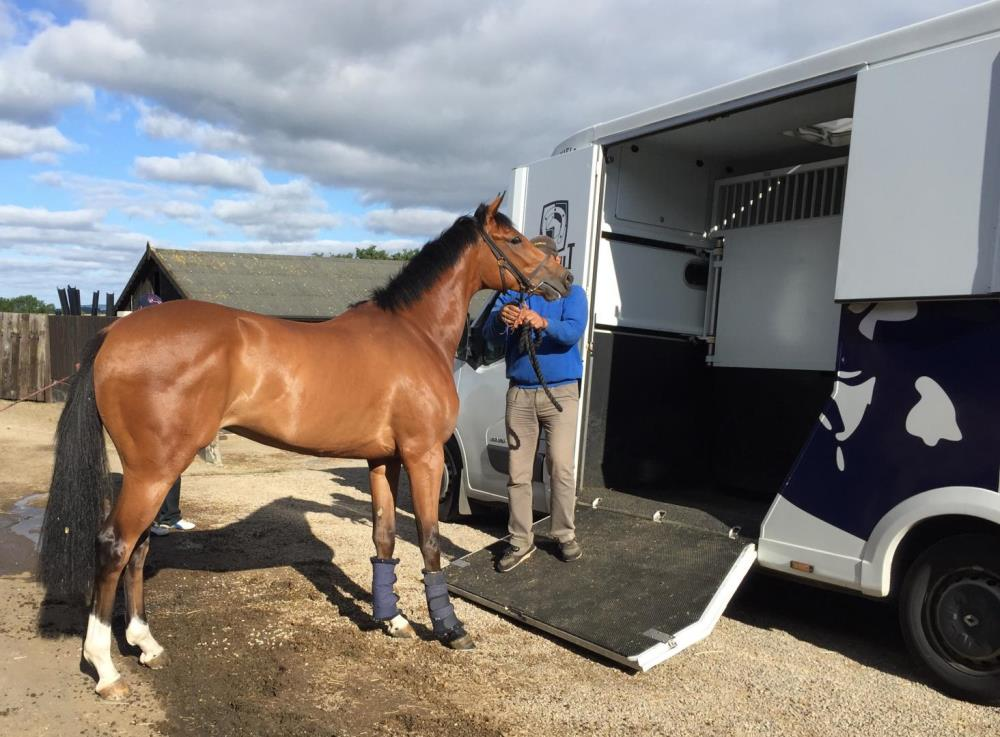Duke Of Freedom heads off to Beverley