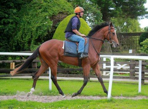 Smashing Gio Ponti two year old available for Sale