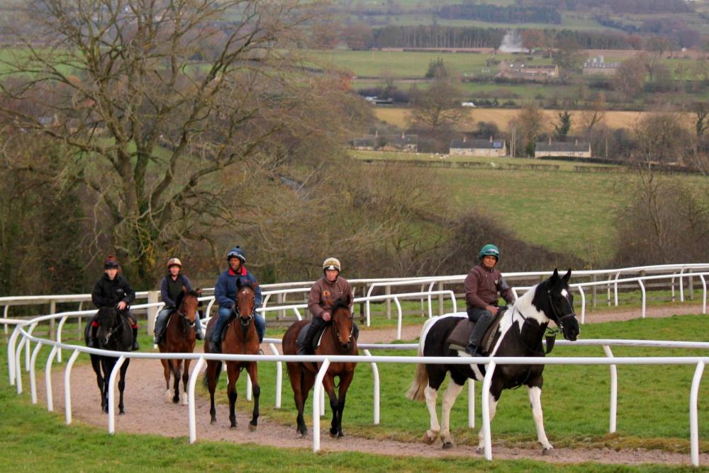 Yearlings on the round canter