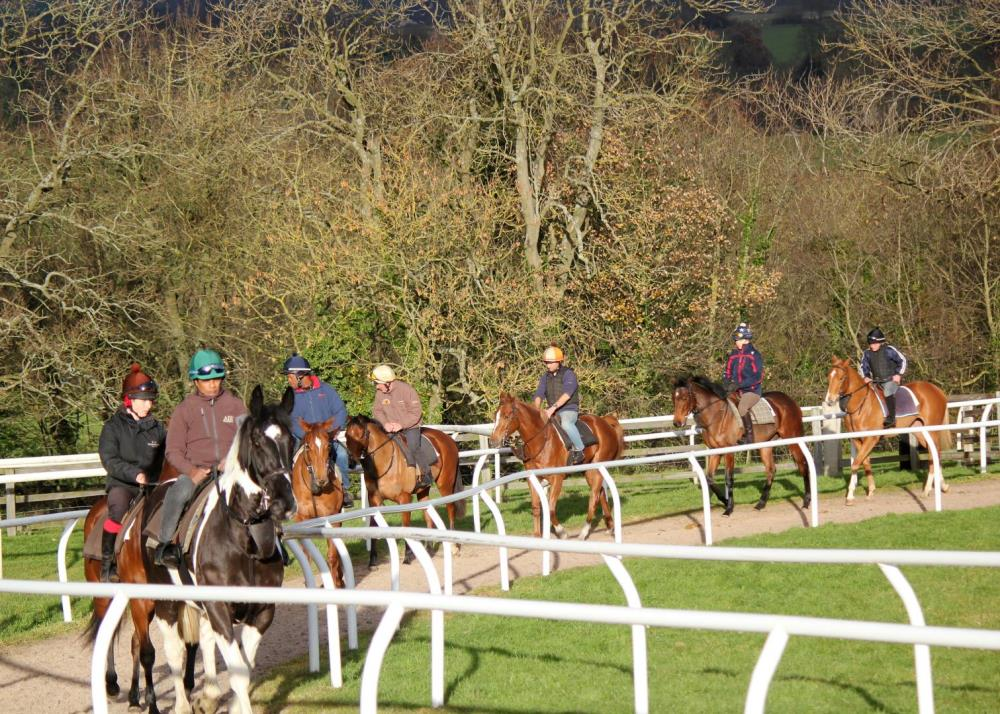 Alfie leads the second lot of yearlings
