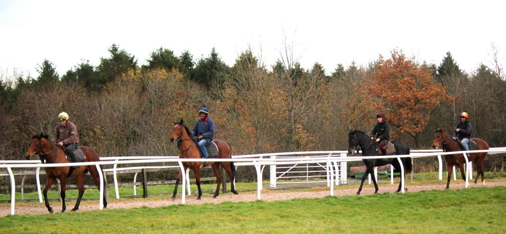 Craig Buckingham's yearling colts