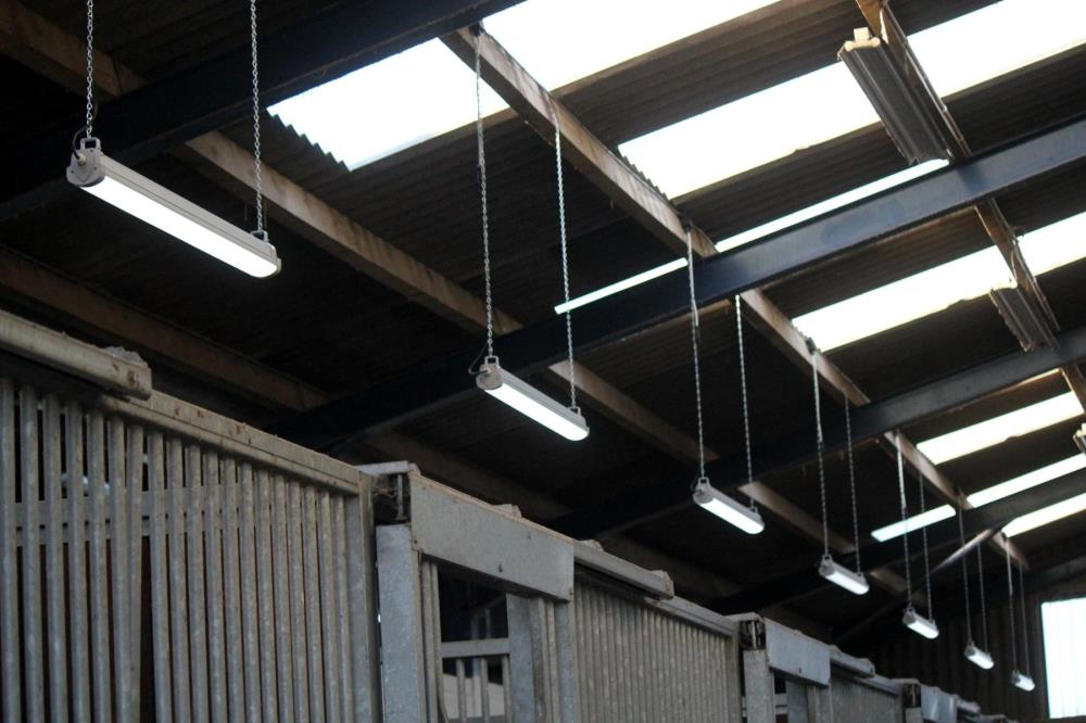 New lights in fillies barn